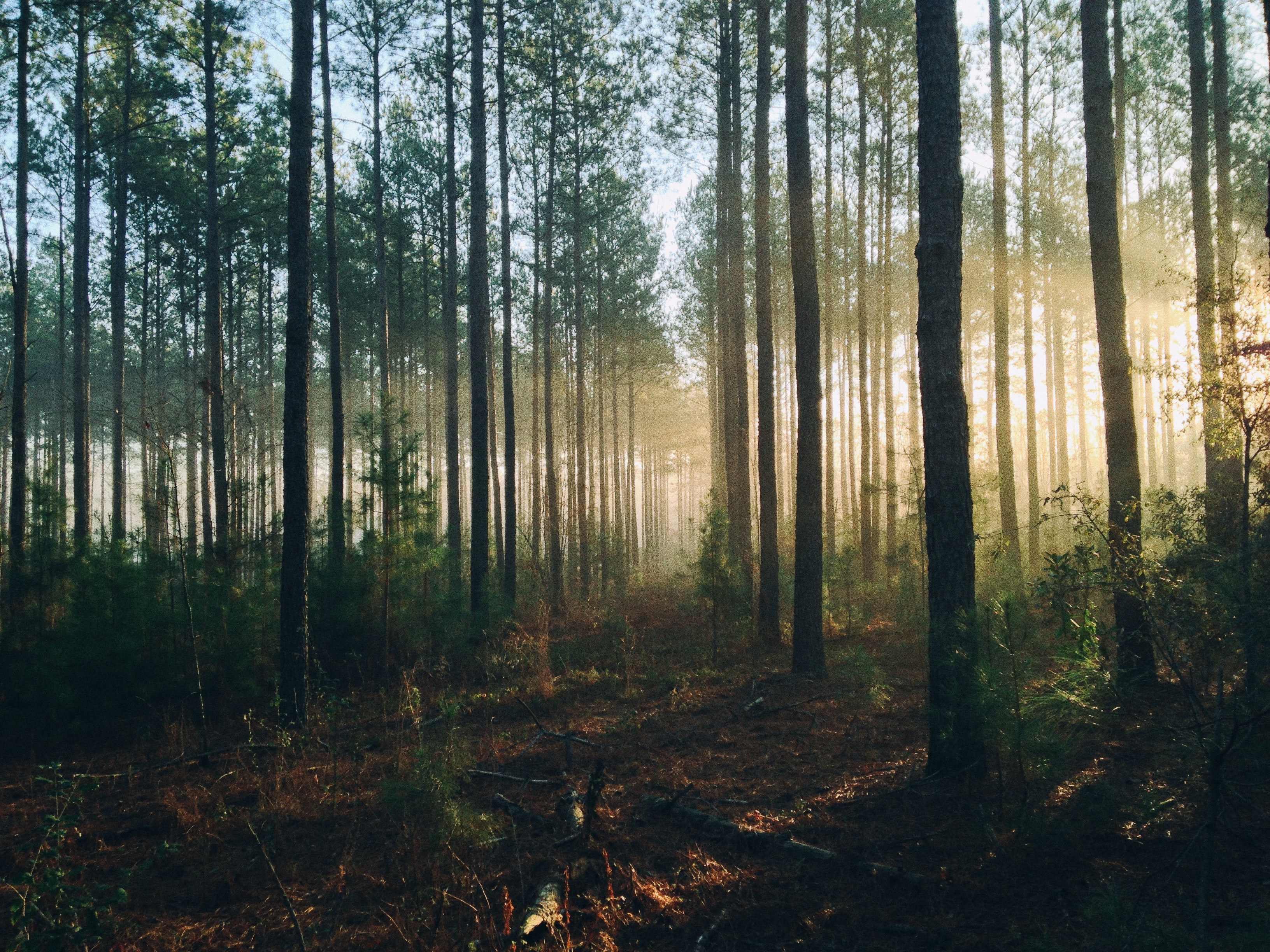 Global sovereign debt market not seeing the trees for the forest
